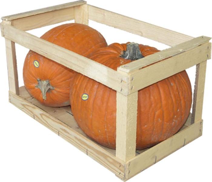 halloween-cassa